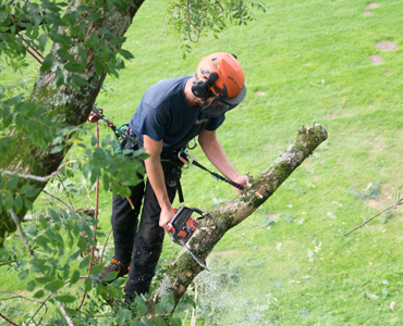 Giles Elliott Tree Surgery. Tree Pruning