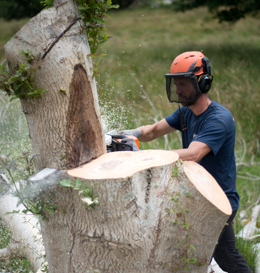 Giles Elliott Tree Surgery
